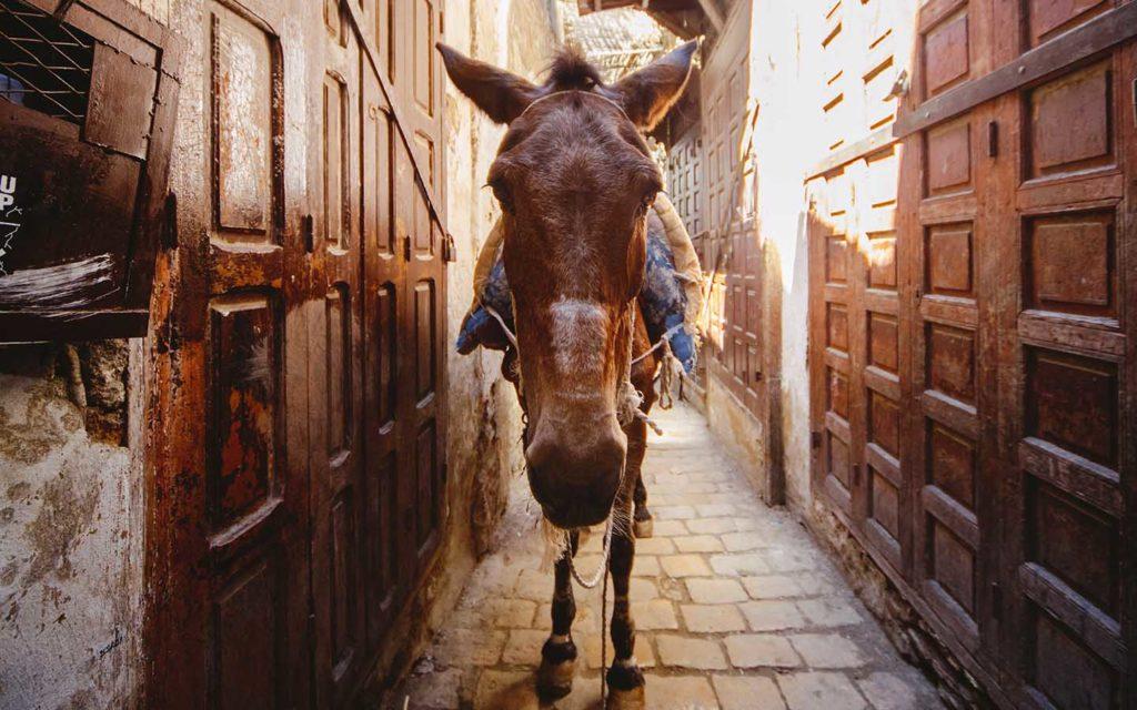 donkey in a narrow street in African medina