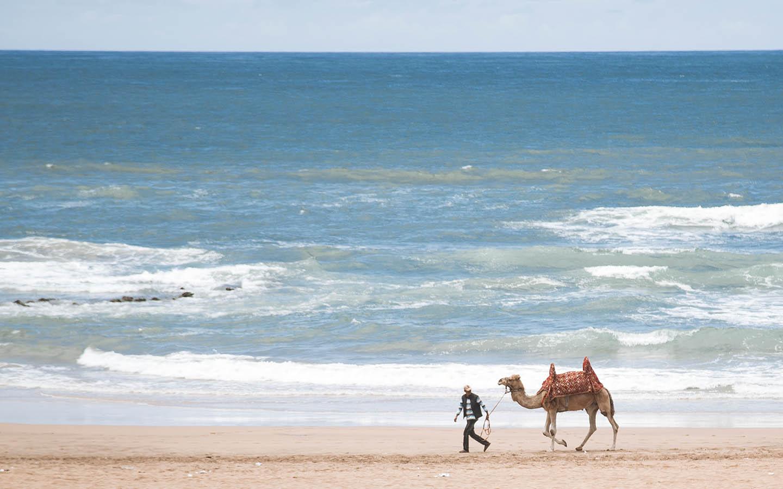 man walks with camel on beach